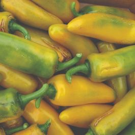 'Long Yellow Ringo' Sweet Pepper Plants | 3 Plants | By Plant Theory