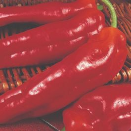 'Long Red Marconi' Sweet Pepper Plants | 3 Plants | By Plant Theory