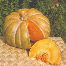'Musquee De Provence' Winter Squash Plants | 3 Plants | By Plant Theory