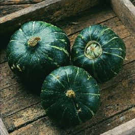 'Buttercup' WInter Squash Plants | 3 Plants | By Plant Theory
