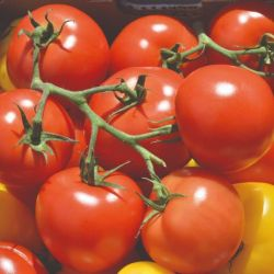 Colourful Tomato Collection | 15 Plants | By Plant Theory