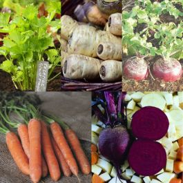 Root Veg Collection | 60 Plants | By Plant Theory