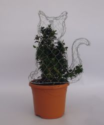 Buxus sempervirens Topiary Box Cat