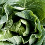 10 x Spring Green Cabbage Plants