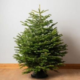 5ft Premium Cut Real Christmas Tree | Nordmann Fir