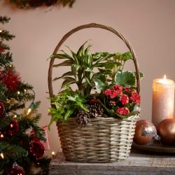 Medium Christmas Basket | Plant Mix | By Plant Theory
