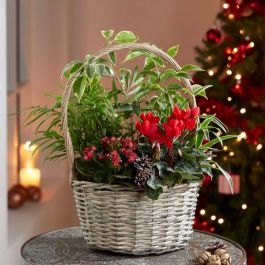 Large Christmas Basket | Plant Mix | By Plant Theory