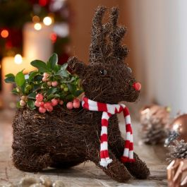 Sitting Reindeer | Gaultheria | By Plant Theory