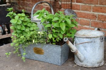 40cm Galvanised Zinc Intwood Trough