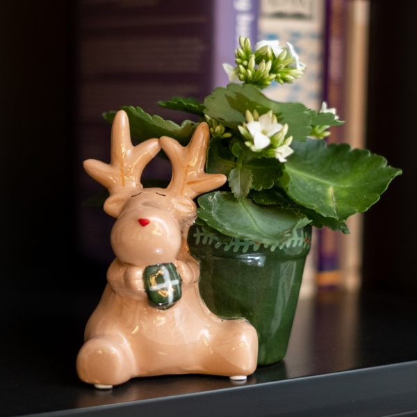 Kalanchoe Plant | 9cm Reindeer Pot | By Plant Theory