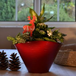Kalanchoe, Hypoestes & Diffenbachia Plants | 23cm Red Ceramic Planter | By Plant Theory
