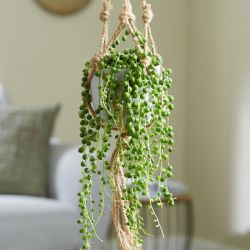 String of Pearls | Senecio Rowleyanus | 14cm Pot | By Plant Theory