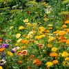 Butterfly Attracting Mix Seeds | By Plant Theory