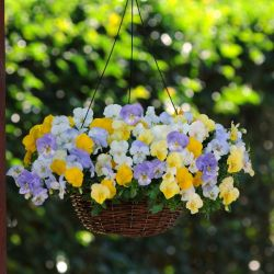 'Pastel Mix' Instant Hanging Basket Plants | Pansy Cool Wave®