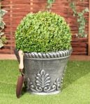 30-35cm Topiary Ball (Buxus) By Primrose®