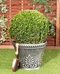 35-40cm Topiary Ball (Buxus) By Primrose®