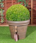 50-55cm Topiary Ball (Buxus) By Primrose®