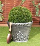 30-35cm Topiary Ball (Taxus) By Primrose®