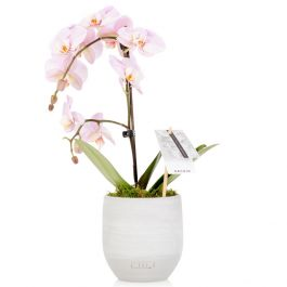 35cm Pink Orchid With Ceramic Pot | By The Little Botanical™