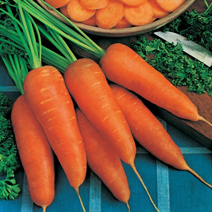 Carrot 'Chantenay Red Cored 2' Seeds | Daucus Carota | By Mr Fothergills