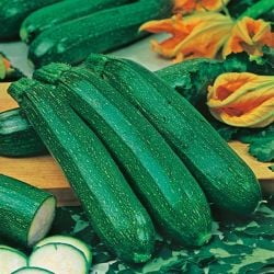 Courgette 'All Green Bush' Seeds | Cucurbita Pepo | By Mr Fothergills