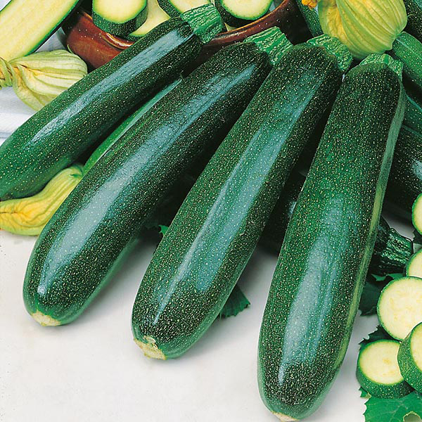 Courgette 'Zucchini' Seeds | Cucurbita Pepo | By Mr Fothergills