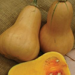 'Hawk F1' Butternut Squash Seeds |By Mr Fothergills
