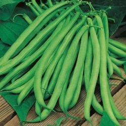 Climbing French Bean 'Blue Lake' Seeds | Phaseolus Vulgaris | By Mr Fothergills
