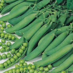 'Hurst Green Shaft' Pea Seeds | By Plant Theory