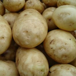 1kg 'Lady Christl' Seed Potatoes | First Early