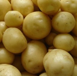 1kg 'Maris Peer' Seed Potatoes | Second Early