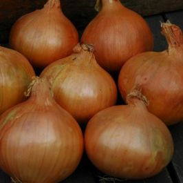 250g 'Stuttgart' Onion Sets