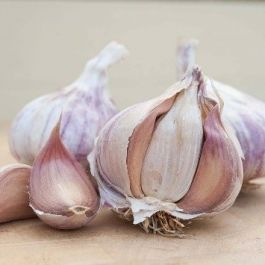 2 'Germidour Garlic' Garlic Bulbs