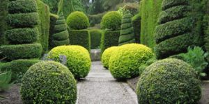 Box Plants - create your own living topiary