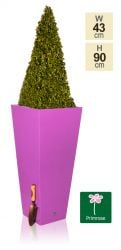 H90cm Gloss Tall Flared Square Fibreglass Planter in Purple - By Primrose®