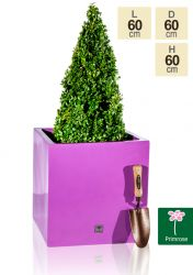 H60cm Fibreglass Cube Gloss Planter in Purple - By Primrose®