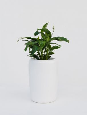 Tracino  Large Planter in White – H75xDia55