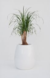 Silba  Small Planter in White – H45xDia45