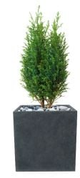 Rugby Fibrecotta Cube Planter - 25cm