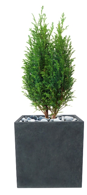 Rugby Fibrecotta Cube Planter - 50cm