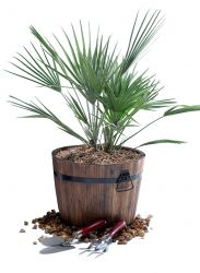 Burnt Wood Pine Tub Planter with Handles - H30cm x D39cm