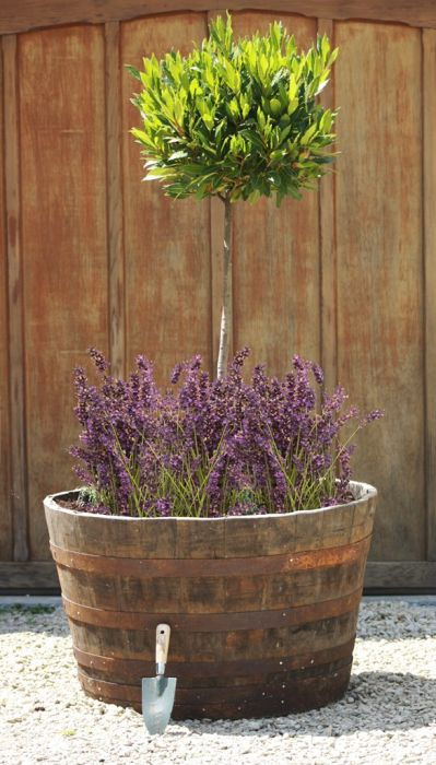 Extra Large Rustic Half Whiskey Barrel Oak Planter D90cm