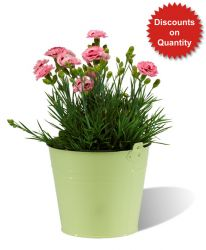 Fullerton Decorative Pale Green Zinc Flower Bucket - H16cm x D19cm