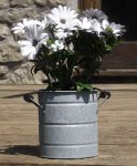 Aged Zinc Churn Planter - 13.5cm
