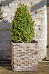 Large Square Willow Basket Planter - H45cm