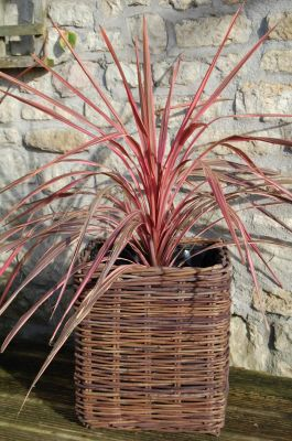 Small Square Willow Basket Planter - H40cm