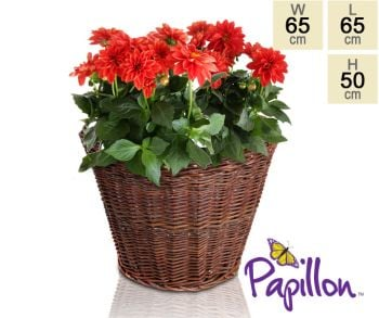 Wicker Round Basket Planter D65cm by Papillon™