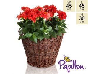 Wicker Round Basket Planter D45cm by Papillon™