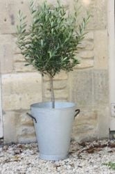40cm Zinc Tall Aged Bucket Planter