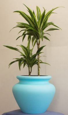 The Fibreglass Malaysian Javan Planter Range - (XXL) 75cm Tall